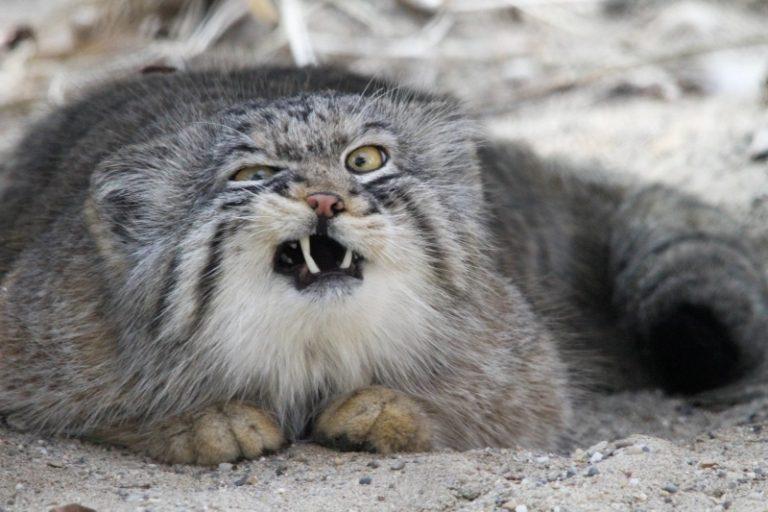 grumpy-confused-cat